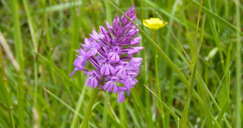 Une flore rare