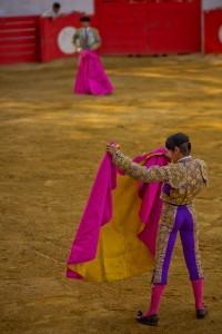 Culture taurine
